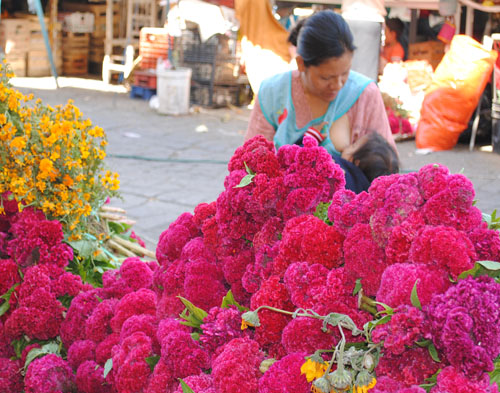 Imagen de Borlas de amor, flores para los fieles difuntos