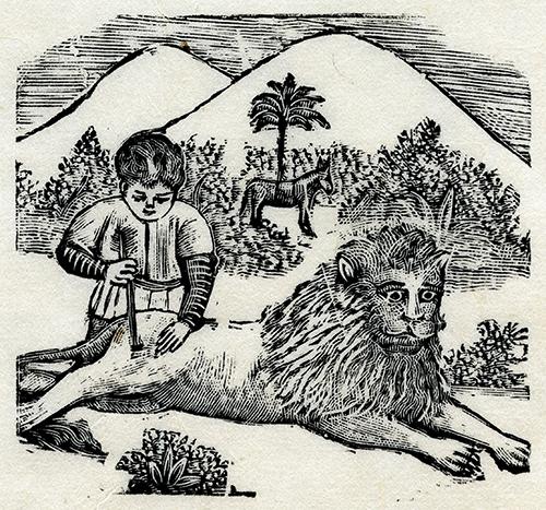 Imagen de Niño curando león